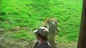 I bimbi e gli animali solo un vetro li separa