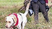 Un cane in addestramento