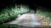 Faccia a faccia con la volpe (video di Elena e Martino, due nostri lettori di Cerro)